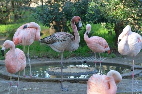 131225furamingo1.jpg